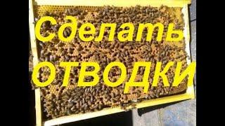 Отводки на лётной пчеле.Подсадка маток на разные породы пчел.Приём пчелиных маток 100 %.