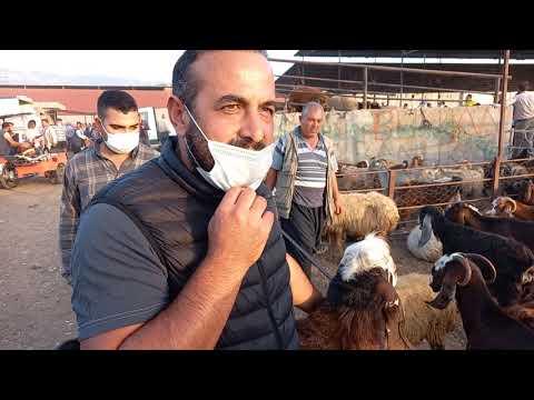 Küçükbaş Hayvan Pazarı  Gezi- Adem Korkmaz