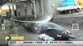 [国际财经报道]热点扫描 日本退出国际捕鲸委员会 重启商业捕鲸| CCTV财经