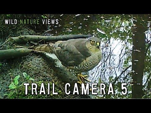 Wildlife on the Trail Camera 5