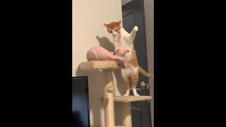 Cute Cats Being Aggressive  Messy Cats Fighting Everyone