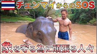 収入0円で経営危機に直面している象使いの人々に会ってきた。【タイ・チェンマイ】