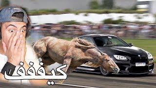 سباق بين اسرع سيارة بالعالم واسرع حصان بالعالم !!