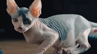 The Most Unique Cat Breeds on The Planet