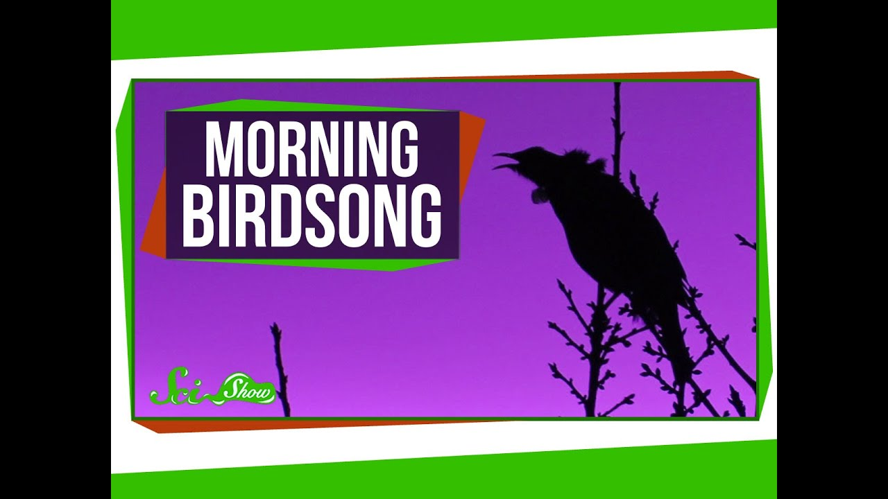 Why Do Birds Sing In The Morning? - Sparkonit