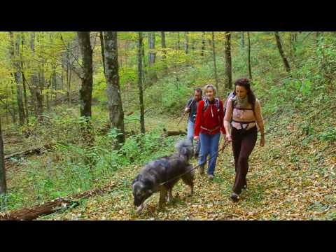 Balsam Mountain Preserve | NC Real Estate | Andie MacDowell on Balsam