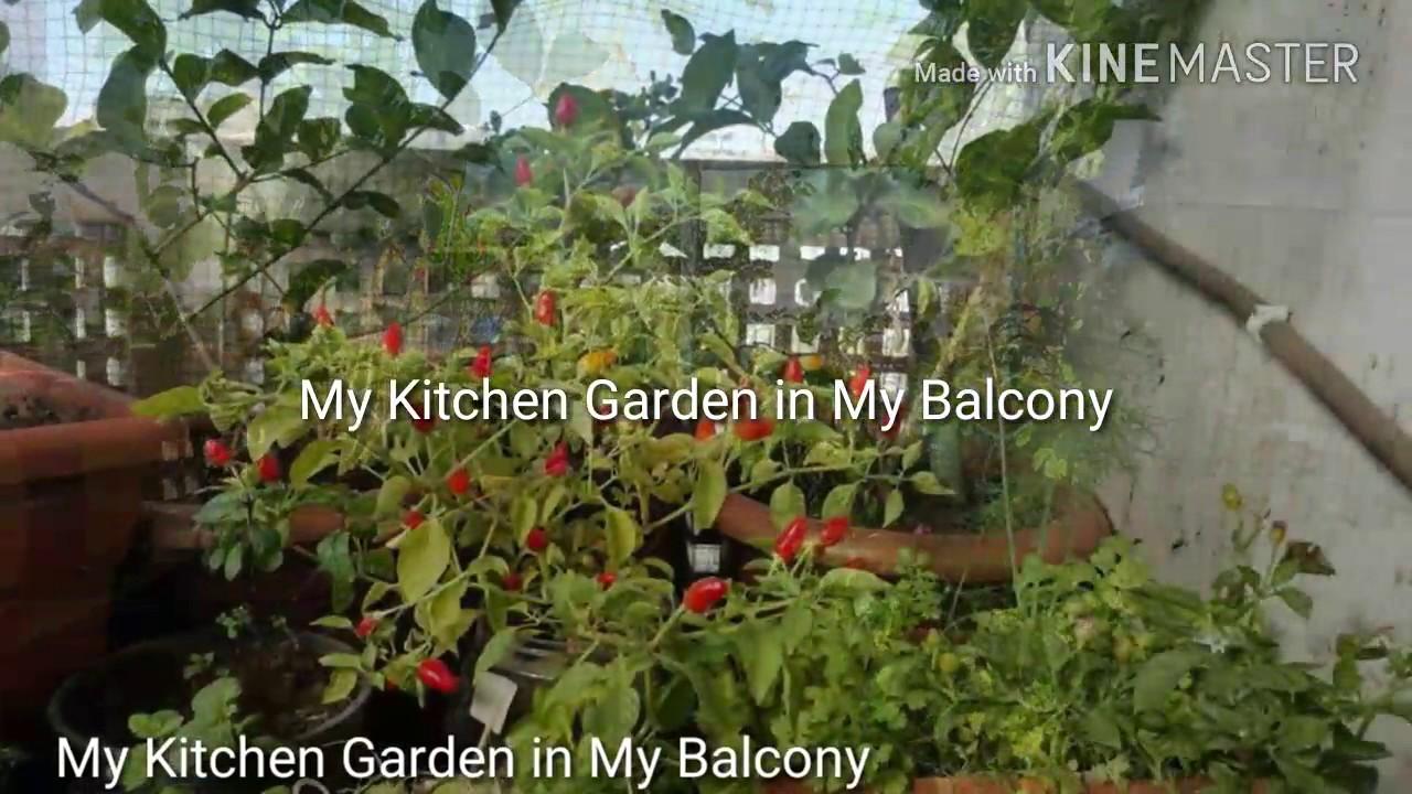 My Kitchen Garden My Kitchen Garden In My Balcony Youtube