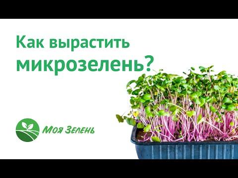 Вопрос: Семена каких растений выбрать для выращивания микрозелени?