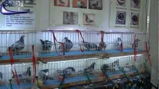 International Pigeon Market in Kassel, Germany (2012)