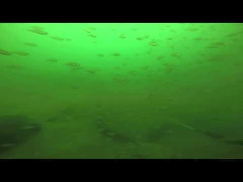 Scuba Diving Greers Ferry Lake Arkansas near the dam
