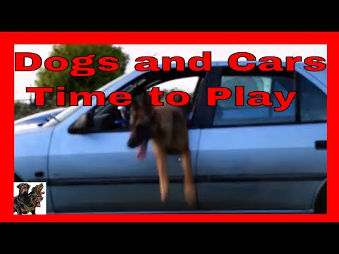 Dogs and Cars - Time to play