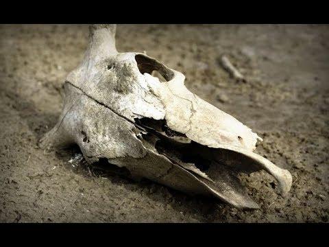 ◇Настоящий череп кота◇ - YouTube