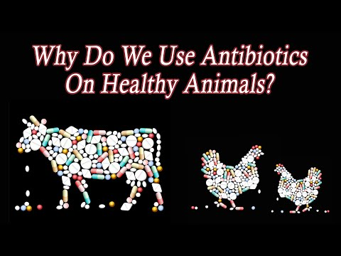 Why Do We Use So Many Antibiotics On Healthy Animals To Grow Meat On American Factory Farms? thumbnail