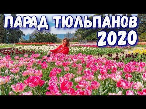 Крым. Безлюдный ПАРАД ТЮЛЬПАНОВ 2020. Никитский Ботанический сад сегодня. Тюльпаны Крыма. Ялта