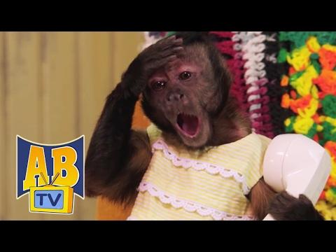 Sing Along | 5 Little Monkeys | Air Bud TV | Animal Songs For Kids