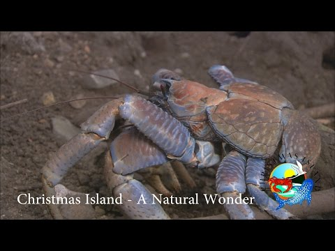 Christmas Island - A Natural Wonder