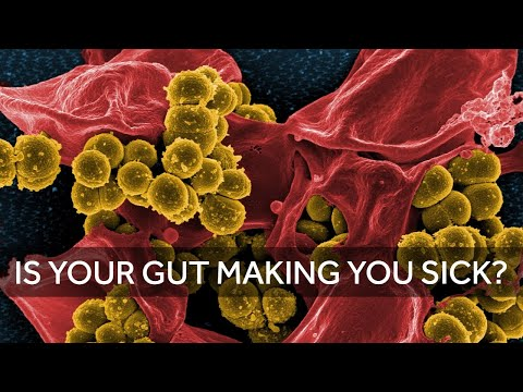 Is Your Gut Making You Sick and Fat?