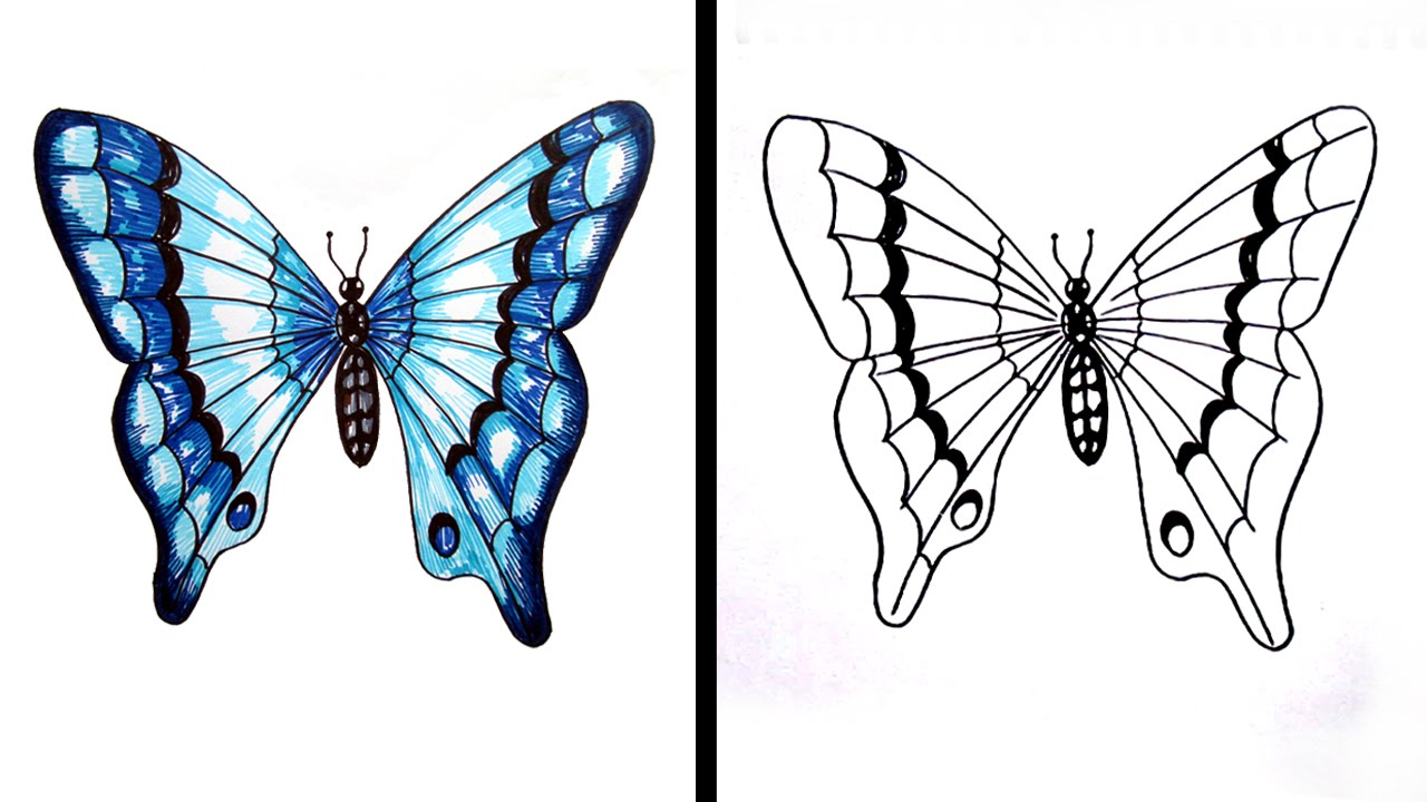 How to Draw a Butterfly Easy Step by Step / Drawing for ...