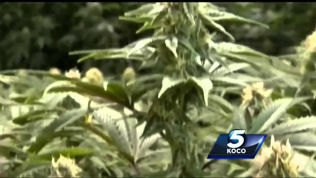 Петиция за легализацию марихуаны россия почему желтеют нижние листья у марихуаны