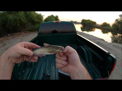 FISHING IN STRATFORD CALIFORNIA