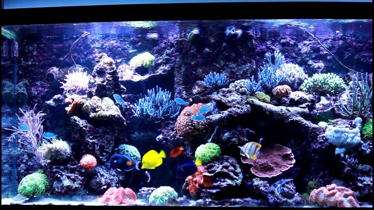 Aquarium recifal 1200l youtube for Aquarium recifal nano