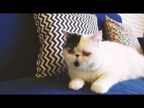 JAKARTA 24/7: CAT CABIN
