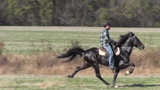Repeat youtube video Champion Single Footing Speed Racking Stallion Touchdown and Jacob Parks