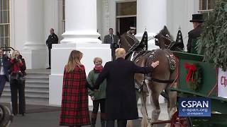 Word for Word: President Trump & First Lady Receive White House Christmas Tree (C-SPAN)