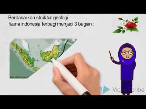 tugas 2 animasi persebaran fauna di indonesia