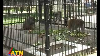 wildlife news of Rangpur Zoo, Bangladesh