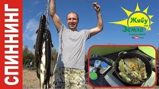 Поймать, пожарить и съесть! Выполнено! Рыбалка на спиннинг от первого лица.