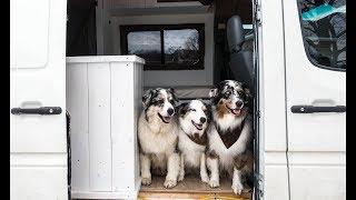3 Dogs in a Sprinter Van | Van Life in Winter