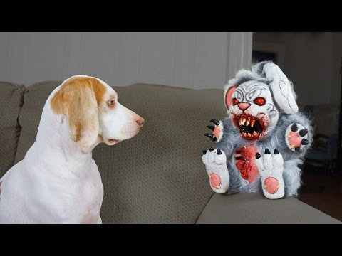 Cute Dog vs. Evil Bunnies: Cute Dog Maymo