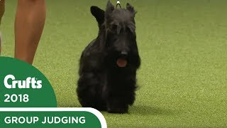 Terrier Group Judging | Crufts 2018