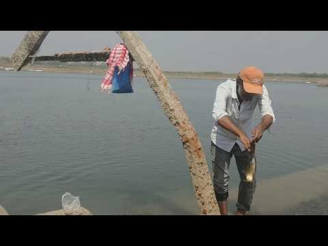 Three hook fishing  rahu fish catch