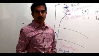 Gamma-Aminobutyric acid - GABA   ( Dr.G.Bhanu Prakash )