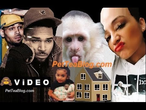 Chris Brown Facing 6 Months Jail for Pet Monkey ..Buys Baby Mama a New HOUSE! 🐒🤑🏡 Mp3