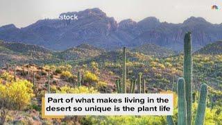 Unique plants of the Sonoran Desert