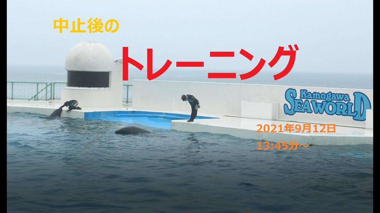 【鴨シー】シャチショー 9月12日中止後のトレーニング