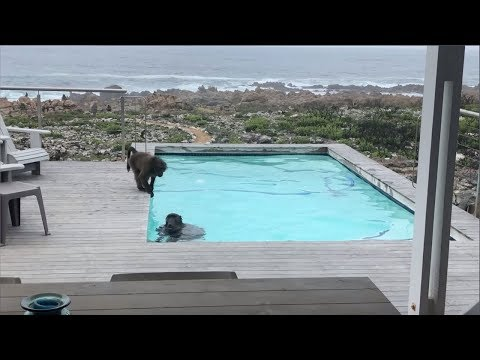 Kimberly and Beck - Kimberly's Pool Is Open But Baboons In South Africa Are Having More Fun