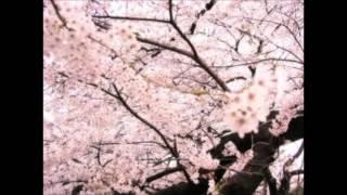 arp - 桜