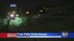 High Winds Send Trees Crashing Onto Houses, Cars