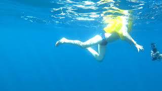 видео Где в Хорватии можно поплавать с дельфинами?