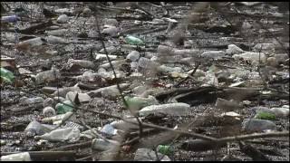 McKellar Lake Pollution