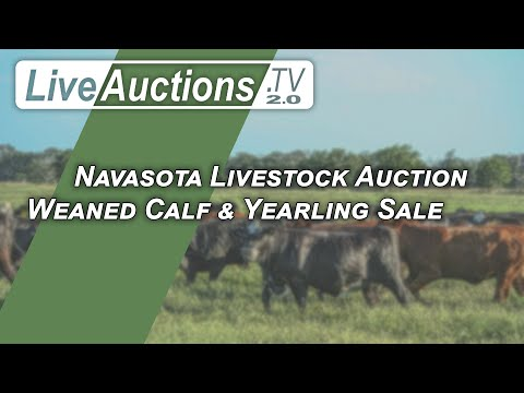 Navasota Livestock Auction Weaned Calf & Yearling Sale 1/20/2021