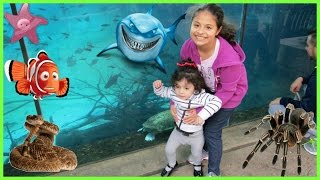 OUTDOOR Playground for Children in park Zoo Family Fun for Kids Children and Toddlers