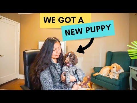 We got a PUPPY (adding a second dog)