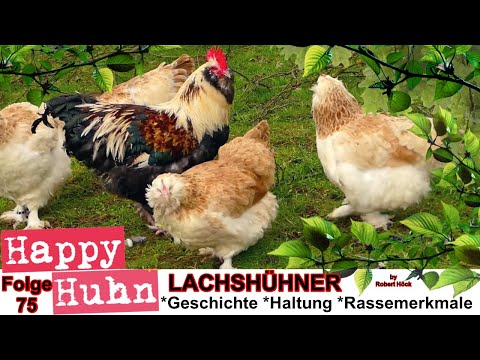 Happy Huhn Folge 75: Deutsche Lachshühner im Rasseportrait mit Zwerg-Lachshühner und Küken