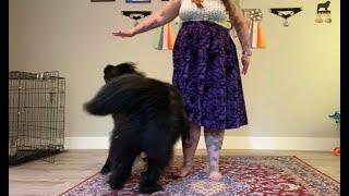 Teach Your Dog To Orbit! | Dog Trick Training | Dog Dancing! | Newfoundland Dog