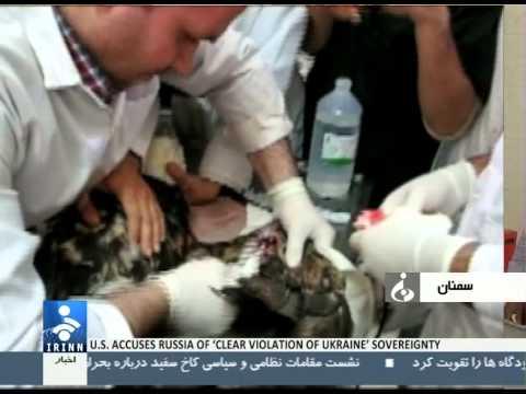Iran Semnan province, Eagle surgery جراحي بال عقاب شاهي در ايران سمنان